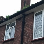 Residential Gutter Cleaning Specialist