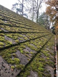 Roof Covered In Moss